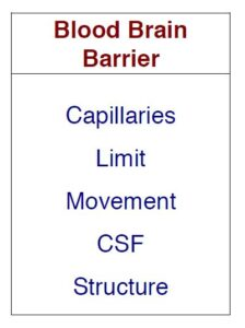 Tanoo card for Blood Brain Barrier. Taboo words are Capillaries, Limit, Movement, CSF, and Structure